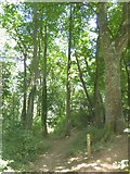 SX6745 : Footpath in Stiddicombe Wood by David Smith