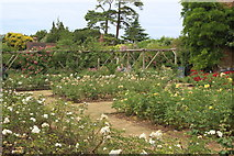 TQ1352 : Rose garden, Polesden Lacey by M J Roscoe