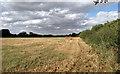 TL6806 : Field near Skeggs Farm, Writtle by Roger Jones