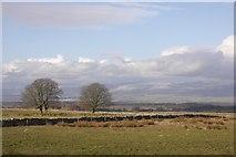 NY6315 : Maulds Meaburn Moor by Richard Webb