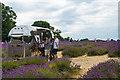 TQ2760 :  Mayfield Lavender Farm by Ian Capper