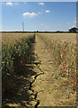 TL2581 : Footpath to Great Raveley by Hugh Venables