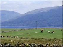NS0769 : Field at Ardmaleish Farm by Thomas Nugent