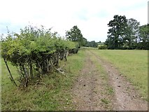 NY3840 : Hedge and farm track near Roe Foot Farm by Oliver Dixon