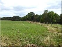NY3841 : Field near Cockleygill Bridge by Oliver Dixon