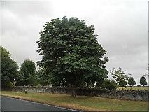 SP1414 : Horse chestnut on the A40, Farmington by David Howard