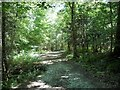 TQ5736 : Wide path, Hargate Forest by Christine Johnstone
