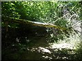 TQ5637 : Another fallen tree in Ramslye Wood by Christine Johnstone