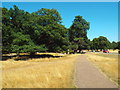 TQ1973 : Path in Richmond Park by Malc McDonald