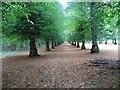 SK6276 : Lime Tree Avenue by John M