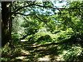 TQ5638 : Dappled shade in Three Acre Wood by Christine Johnstone