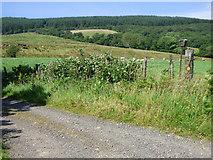 NS0571 : Shalunt Farm road by Thomas Nugent