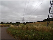 TL8627 : Tey Road & Electricity Pylons by Geographer