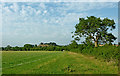 SP5972 : Pasture and bridleway north-east of Crick in Northamptonshire by Roger  Kidd