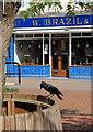SP9501 : Jackdaw outside Brazil's by Des Blenkinsopp