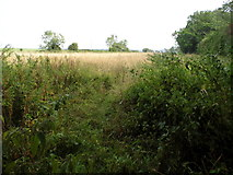 TQ3317 : Field to the south of Burgess Hill by David Howard