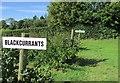 NO3716 : Cairnie Fruit Farm by Bill Kasman
