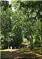SU9941 : Path to the tea room, Winkworth Arboretum by Derek Harper