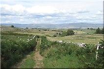 NY6511 : Coppermine Lane by Richard Webb