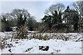 SP2965 : Teasels bent by snow, Brindley's Field, southeast Warwick by Robin Stott
