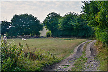 SS8305 : Mid Devon : Grassy Field by Lewis Clarke