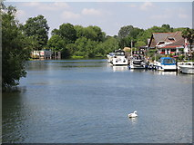 TQ0866 : The River Thames between Desborough Island and Thames Meadow by Mike Quinn