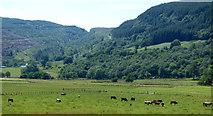 NR9983 : Farmland at Glendaruel by Thomas Nugent