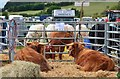 NT2939 : Cattle pens at Peebles Show by Jim Barton
