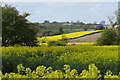 NZ2935 : Farmland, Tursdale by David Robinson