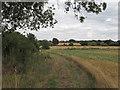 TL6708 : Public Footpath along Field Boundary, Writtle by Roger Jones