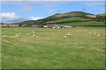 NX1896 : Sheep Grazing at Shallochpark Farm by Billy McCrorie