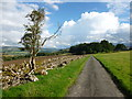 NT0604 : Road north of Lawesknowe, Annandale : Week 33