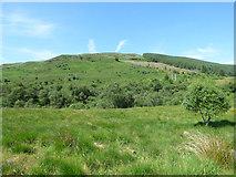 NS0782 : Woodland on Creag an Tamhaisg by Thomas Nugent