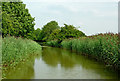 SP6282 : Canal  south-east of North Kilworth in Northamptonshire by Roger  Kidd