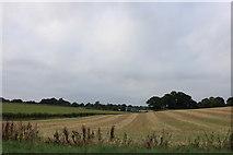 SU5727 : Field by Durden Cross, Cheriton by David Howard