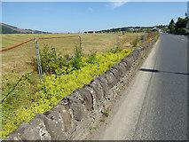 NS1580 : The A815 road at Sandbank by Thomas Nugent