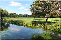 SU4828 : River Itchen and Gater Field by Des Blenkinsopp