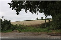 SU6526 : Field by the A272, West Meon by David Howard
