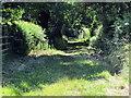 SJ5663 : Path to Portal Farm by Jeff Buck