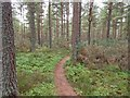 NH5651 : Single track path in Spital Wood by valenta