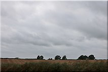 SU8023 : Field by the A272, Rogate by David Howard