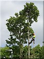 SO8933 : Tree surgeon at work by Philip Halling