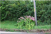 SU7223 : Flowers by Winchester Road, Stroud by David Howard