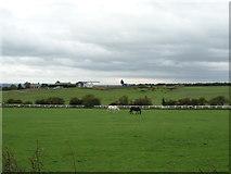 NZ2857 : Grazing south of Mount Lane by JThomas