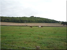 NZ3354 : Grazing off Coxgreen Road by JThomas