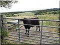 NZ0653 : Field gate, Shotleyfield by Robert Graham