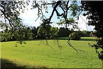 SU4553 : Field in Dunley by David Howard