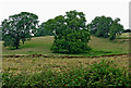 SP6687 : Pasture south-east of Laughton in Leicestershire by Roger  Kidd