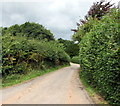 SO4408 : Hedge-lined minor road in Coed-y-fedw, Monmouthshire by Jaggery