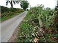 SJ7709 : Fallen tree branch on the roadside by Philip Halling